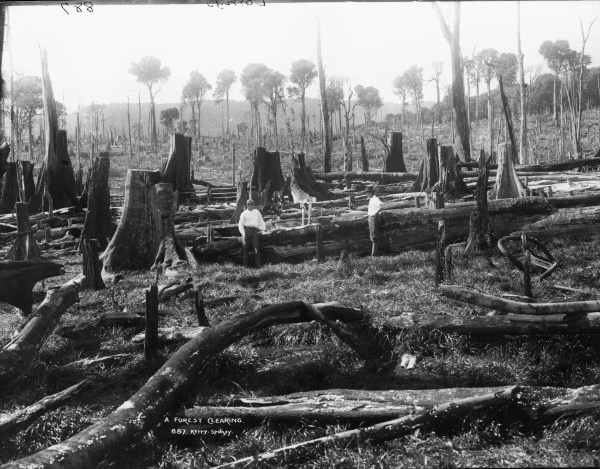 historic image of logging